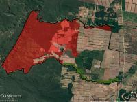 Según Greenpeace, una empresa lleva desmontadas miles de hectáreas de bosques protegidos