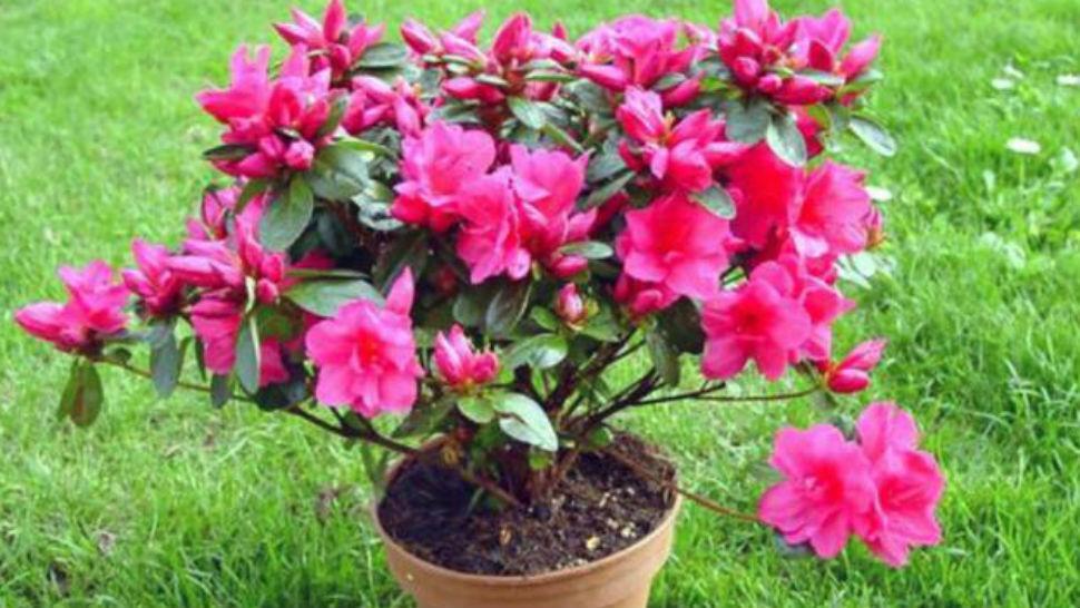 10 plantas venenosas que pueden estar en tu jard n la for Algunas plantas ornamentales