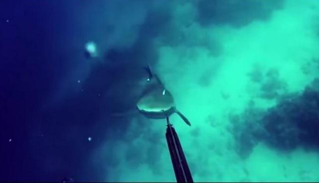 Tiburón ataca por sorpresa a un pescador submarino