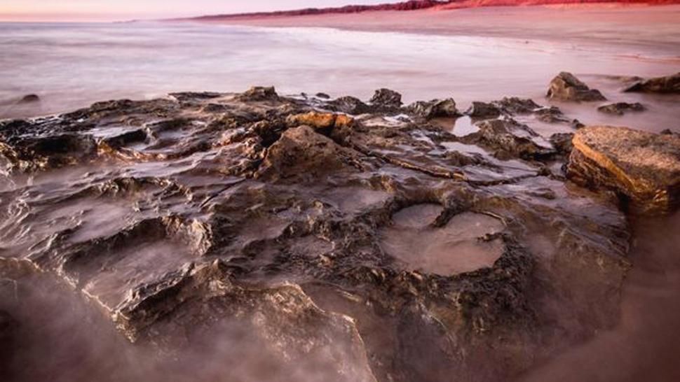 La huella de dinosaurio más grande fue encontrada en Australia