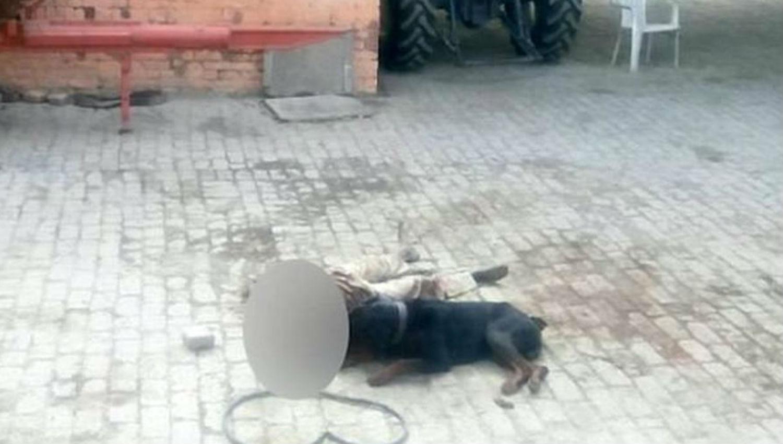 Rottweiler atacó y mató a su dueño