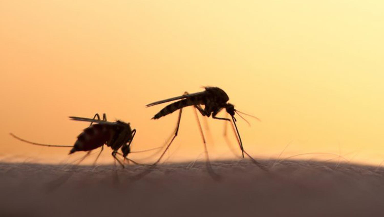 Soltará Google 20 millones de mosquitos infectados
