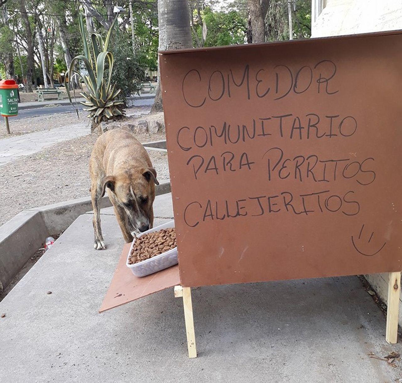 El comedor para perros callejeros contin a sumando buenas for Requisitos para abrir un comedor comunitario