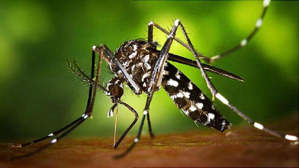 Zika: confirmaron dos casos de microcefalia causados por el virus