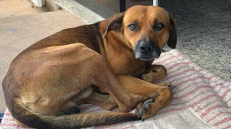 Perro lleva 4 meses esperando a su dueño en un hospital