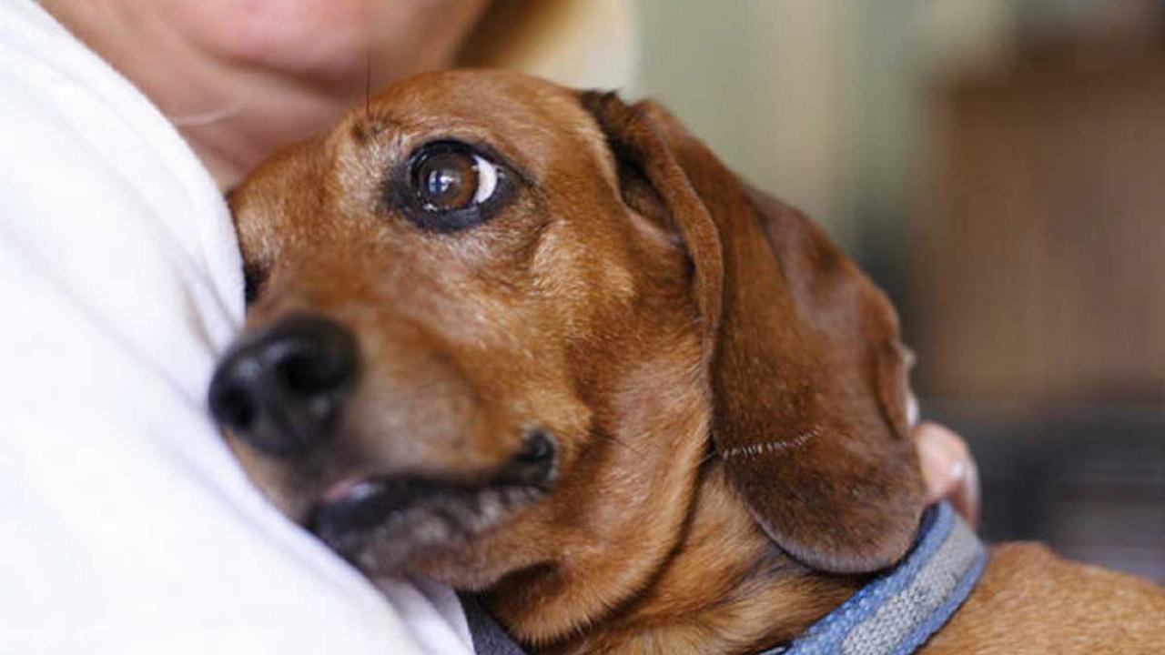 ¿Qué hace tu perro si estás triste y no te puede ayudar?