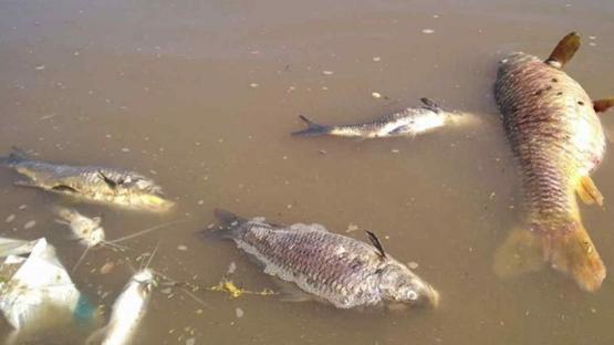 Metán: la justicia investiga la mortandad de peces en el dique