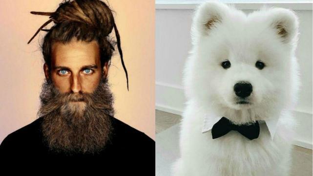 67c997634668 Científicos compararon el vello facial de 18 hombres con el pelo de 30  canes. El resultado te asustará.