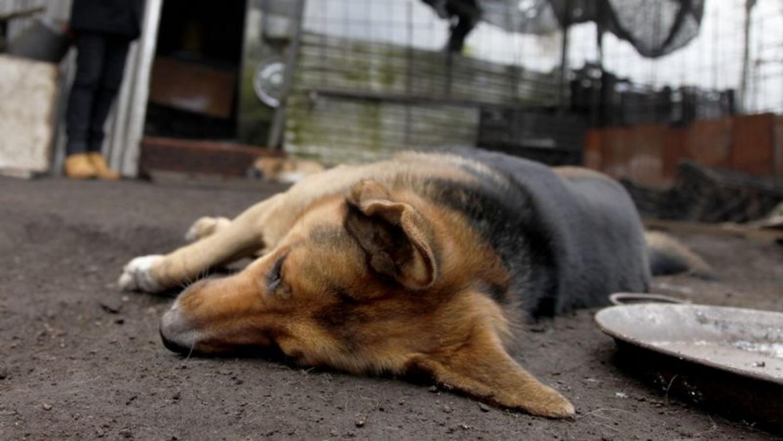 Matanza de animales: aseguran que no hay veneno en el agua y piden detener al finquero - Actualidad | La Gaceta Salta - La Gaceta de Salta