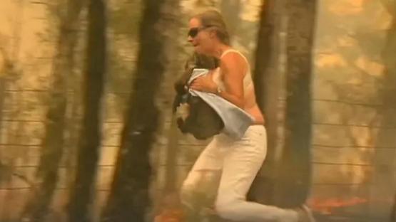 Una mujer se quitó la remera y avanzó entre las llamas para rescatar a un koala de un incendio
