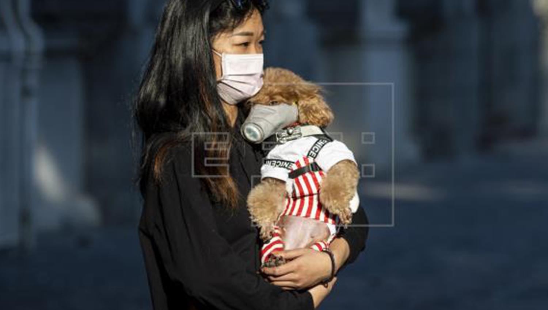 Confirma Hong Kong primer caso de transmisión de coronavirus humano a animal